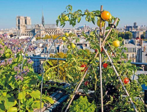 ÉPISODE 2: L'agriculture urbaine, qu'est-ce que c'est exactement ?