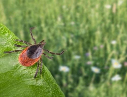 La maladie de Lyme, un danger pour les agriculteurs, mais aussi pour tous